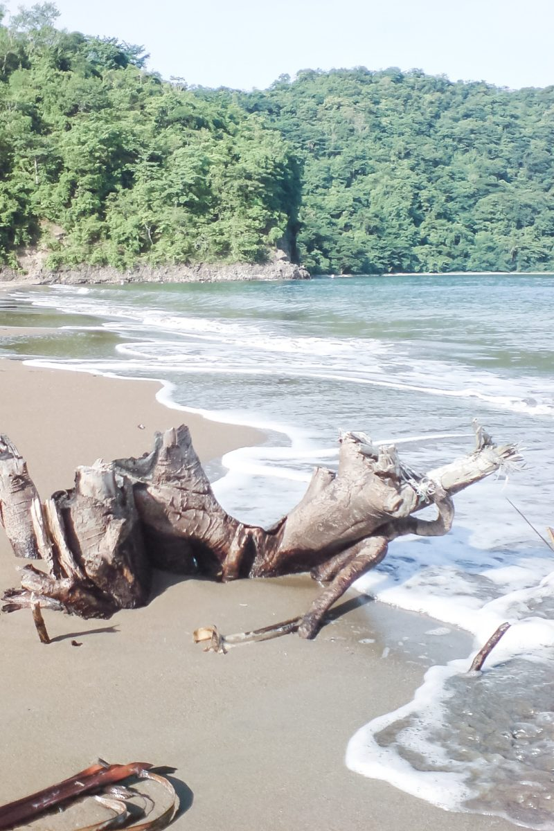 Drift wood on Calayo beachfront