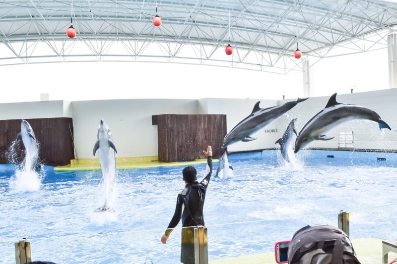 Dolphin show at Fakieh Aquarium