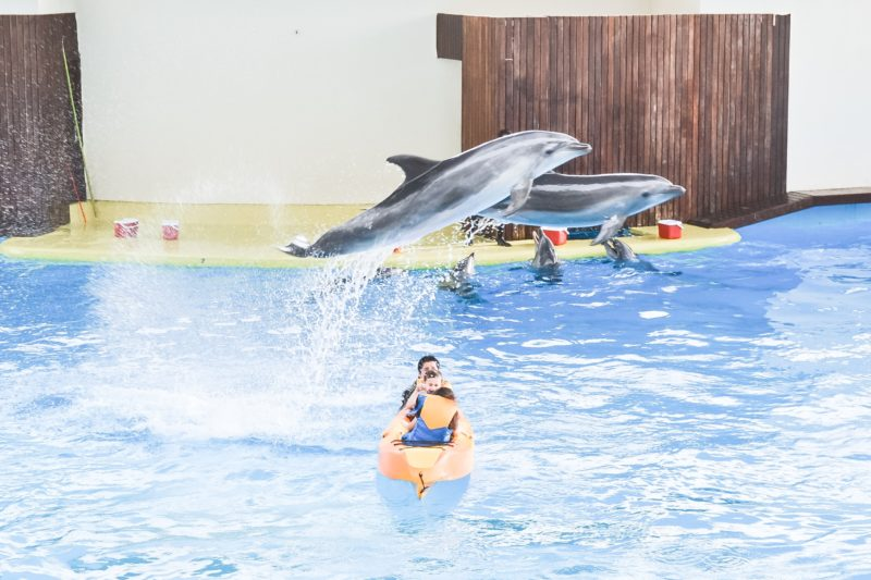 Dolphin show and kayak ride at Fakieh Aquarium