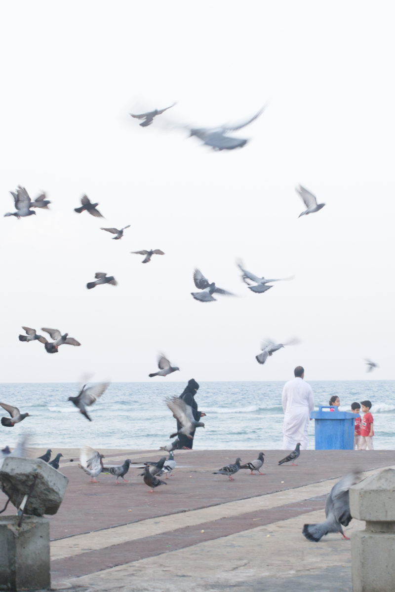 Pigeons in Jeddah Corniche by Noel Cabacungan
