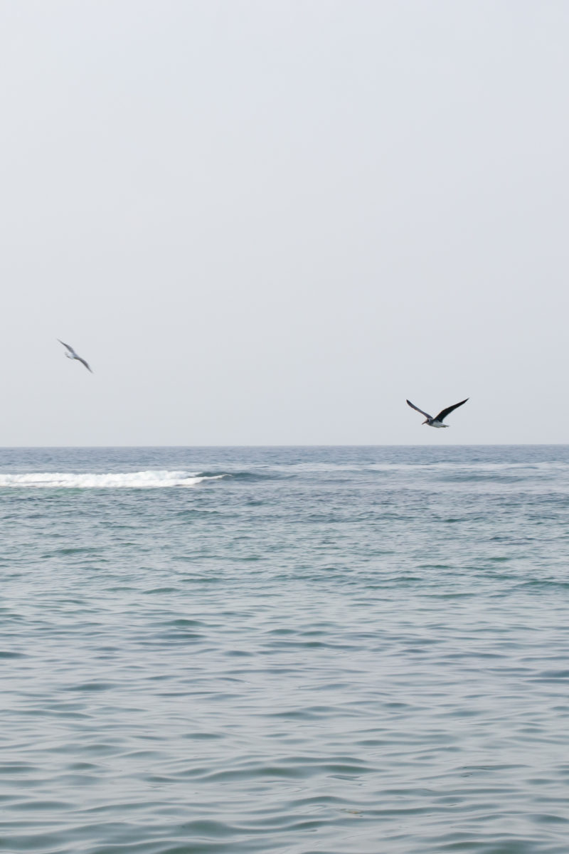 Seagulls at Jeddah Corniche by Noel Cabacungan