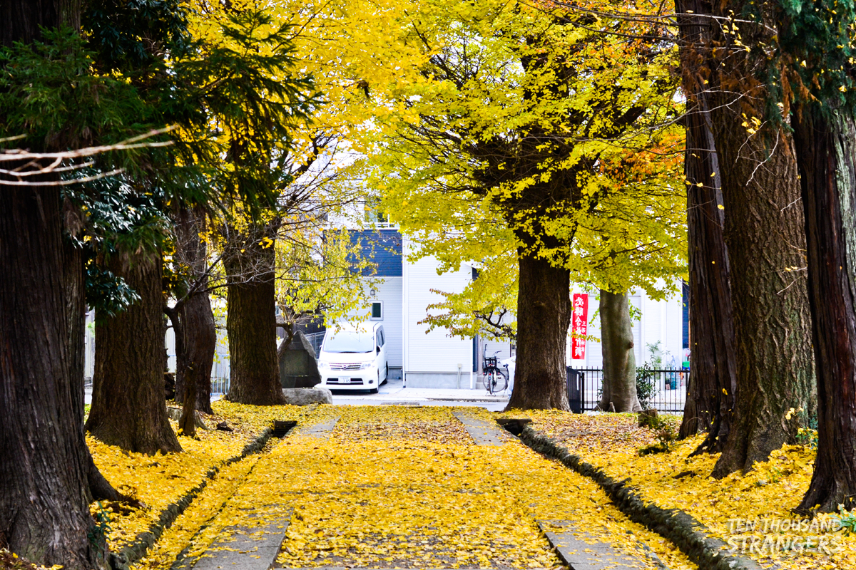 Fall foliage at Kawagoe Castle Ruins